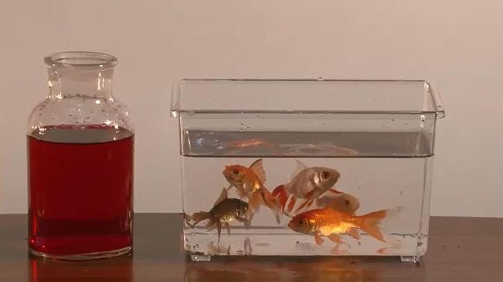 Goldfish test